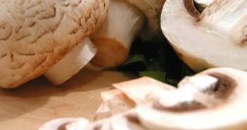 hartig paddenstoelenschoteltje