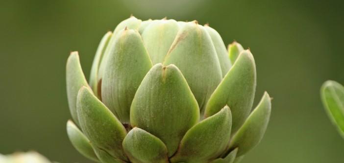 artisjok: heilzaam voor gal en lever
