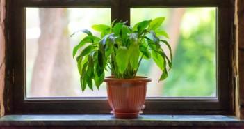 kamerplanten als luchtzuiveraars