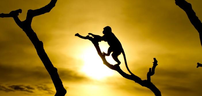 het jaar van de aap